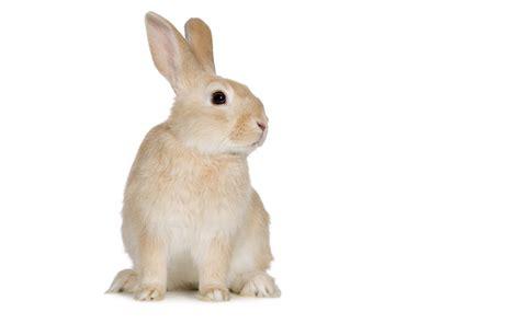 Заяц на белом фоне