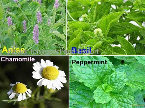 Caraway Seeds Productsegypt Caraway Seeds Supplier