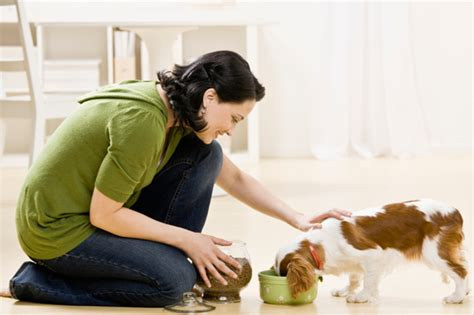 Pet Care Dos & Don'ts