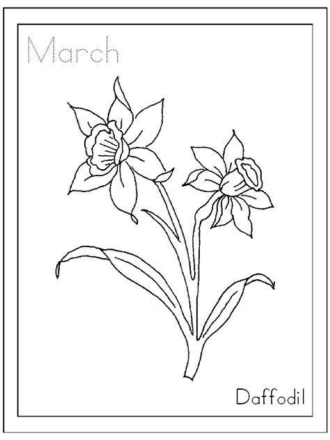 printable daffodil cliparts   clip art