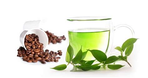 does green tea caffeine in it 8 expert secrets of female physique transformation
