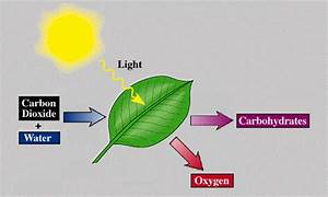 Photosynthesis Gifs