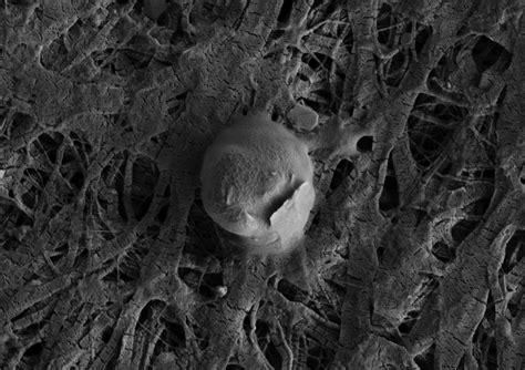 bacteria rule life  deep beneath antarctic ice