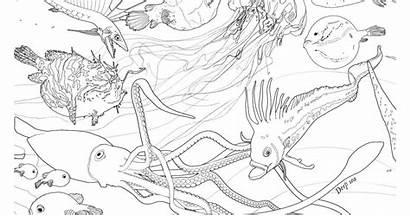 Deep Coloring Sea Viperfish Pages Fish Angler