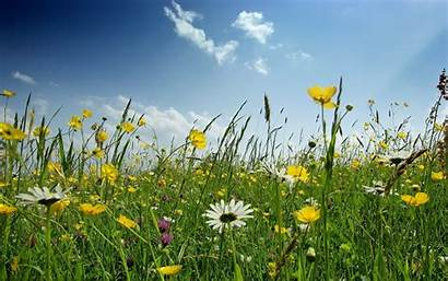 Spring Landscape Wallpapers Flowers Landscapes Vector Yellow