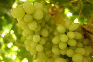 Grapes HD Walpapers | Shining Stuff - Hd Wallparers - Top ...