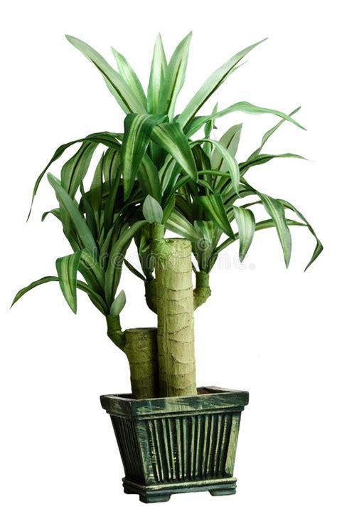 plante verte pour chambre a coucher plantes dans une chambre cliquez ici plante couvre sol