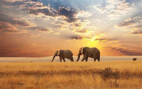 Top 10 Beautiful Animal Wallpapers - top 10 animals wallpapers hd animals wallpapers