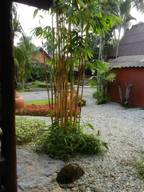 Bambusgarten » Daran Sollten Sie Bei Der Planung Denken