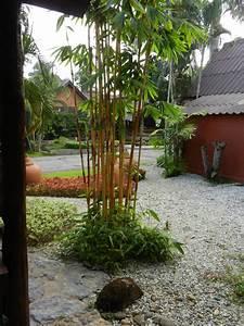 Welche Pflanzen Eignen Sich Als Sichtschutz : bambus garten daran sollten sie bei der planung denken ~ Sanjose-hotels-ca.com Haus und Dekorationen