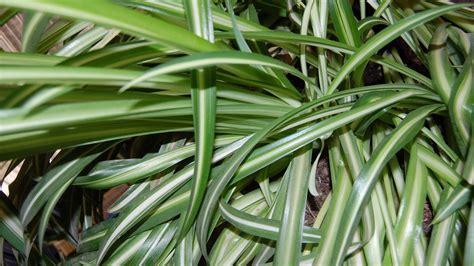 Quelles Plantes D'intérieur Choisir Pour Une Pièce Peu