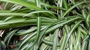 Plante D Intérieur : quelles plantes d int rieur choisir pour une pi ce peu ~ Dode.kayakingforconservation.com Idées de Décoration