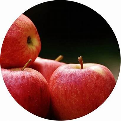 Apples Garden Activities Celebrating Activity Kidsgardening