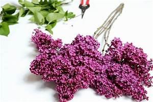 Flieder Schneiden Video : wenn der flieder wieder bl ht das perfekte geschenk ~ Orissabook.com Haus und Dekorationen