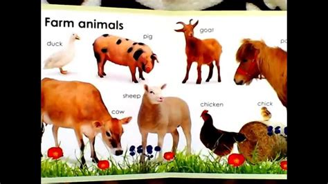 baby book   animals youtube