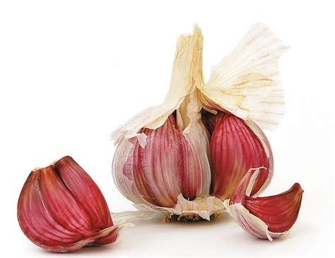 a l in the pr 233 fou all 233 g 233 224 l ail ros 233 de bretagne cuisinons les legumes