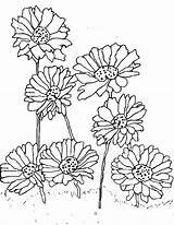 Daisy Coloring Pages Flower Print Planting Scout Printable Getdrawings Getcolorings sketch template