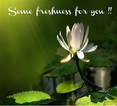 Morning Freshness Fresh Greetings Greeting Someone Card
