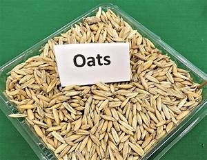 Free Photo  Oats  Grain  Cereal  Animal Feed