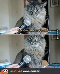 Wie Fange Ich Eine Katze : ich eine katze lustige bilder auf ~ Markanthonyermac.com Haus und Dekorationen