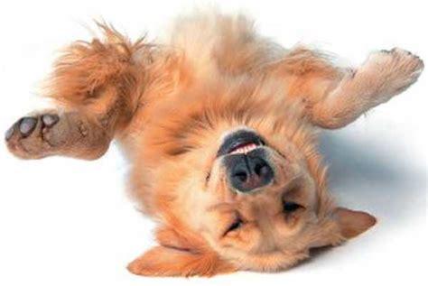 onderdanig in bed juckreiz was hunden und katzen schnell linderung