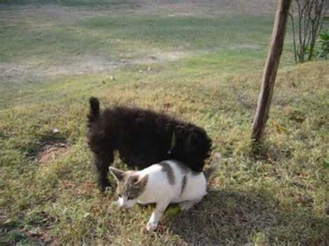 katze gegen hund  video
