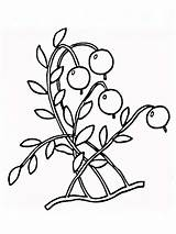 Coloring Cranberry Pages Cowberry Berries Drawing Printable Fruits Recommended Getdrawings Mycoloring Colors sketch template