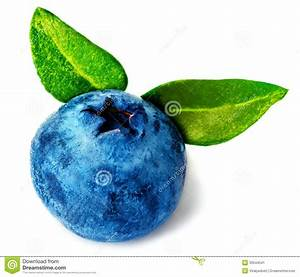 Single Fresh Blueberry Stock Image - Image: 33544541