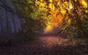 Nature, Landscape, Forest, Mist, Sunrise, Leaves, Fall, Trees, Atmosphere, Path, Fairy, Tale