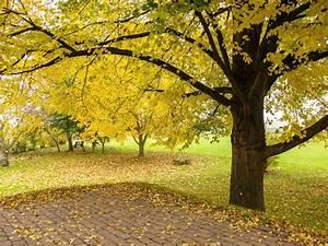 Garten Im Herbst : ferienwohnung str ver weserbergland hameln familie j rg und carola str ver ~ Whattoseeinmadrid.com Haus und Dekorationen