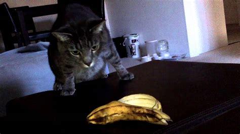 banana cat scared