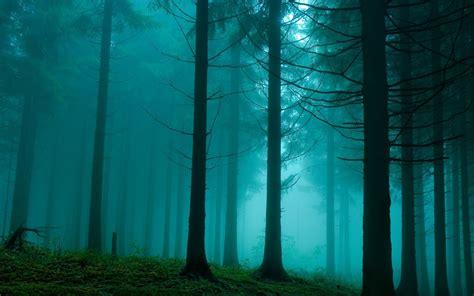Foggy Evergreen Forest Wallpaper Wwwpixsharkcom