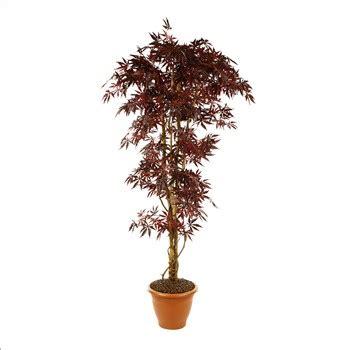 erable japonais en pot 216 29 cm 216 80 x h 150 cm mica jardinerie truffaut