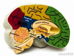 What Are Symptoms Of Parietal Lobe Injury   With Pictures