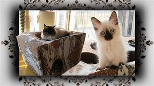 Katzenspielzeug Selber Machen Karton : diy katzen trampolin spielh hle aus karton teil 1 cat game cave youtube ~ Frokenaadalensverden.com Haus und Dekorationen