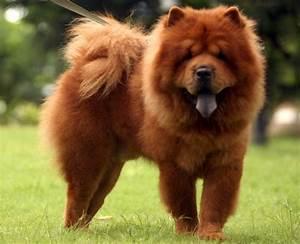 5 najładniejszych psów rasowych Olfaktoria pl