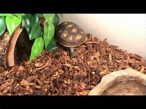 Russian Tortoise Habitat Setup