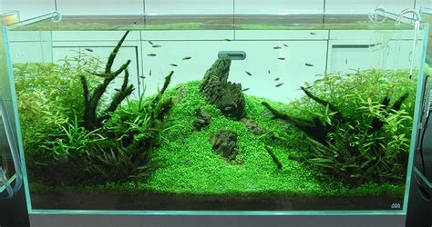 Japanese Aquascape nature aquariums and aquascaping inspiration