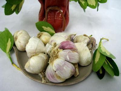glossaire de cuisine cuisine provençale fiche cuisine provençale et recettes