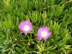 Plantes Grasses Extérieur : plantes grasses supertoinette ~ Dallasstarsshop.com Idées de Décoration