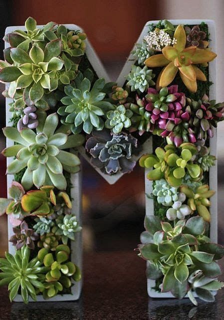 How To Plant A Vertical Succulent Garden by Plant A Vertical Succulent Garden Projects Succulents