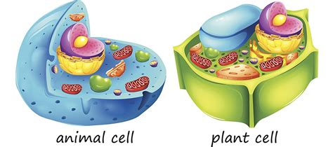 Cell Organelles  Kids Biology