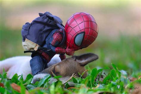 spider man   puppy photoshoot