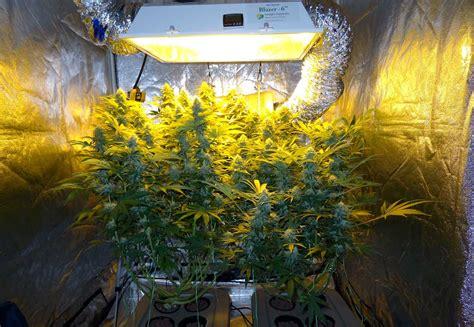 top fed dwc cannabis setup guide bubbleponics grow