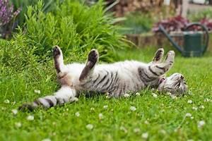 Katzen Garten Vertreiben : katzen aus dem garten vertreiben ~ Michelbontemps.com Haus und Dekorationen