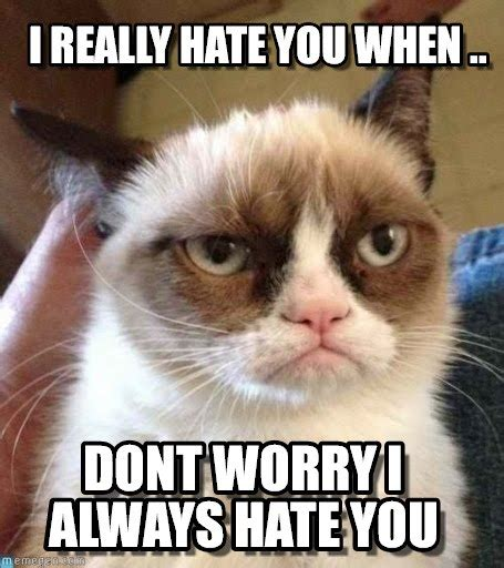 I Hate You Memes - i really hate you when grumpy cat reverse meme on memegen