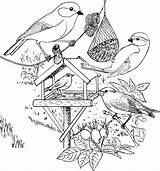 Coloring Vogels Winter Plank Bird Kleurplaat Template Afb Voeren sketch template