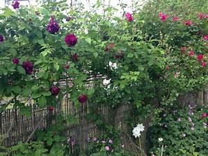 Garten Im September : mein gr ner notizblock der garten im september ~ Watch28wear.com Haus und Dekorationen
