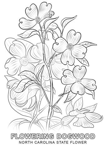north carolina state flower coloring page  printable
