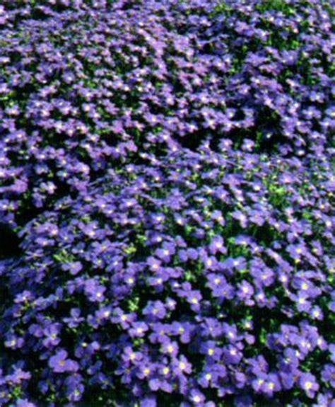 winter bloemen australie borderpakket zon 5 m 178 30 vaste planten